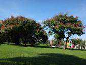 平鎮復興親子公園秋天的花草樹木:DSC05964.JPG