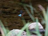 雙溪秋天的鳥類:074A5707.JPG