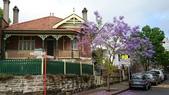 2017雪梨的藍花楹:10495.jpg