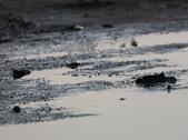 台南沿海生態、鹽田風光與落日:074A4459.JPG