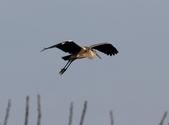 復旦社區冬天的鳥兒:074A7739a.jpg