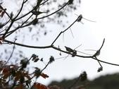 大雪山賞鳥和松鼠及猴王:074A7311.JPG