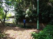 修剪樹籬:DSC09163.JPG