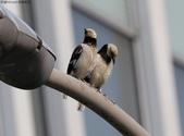 南港鳥兒:074A2406禱告.jpg