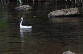雙溪秋天的鳥類:074A5616.JPG