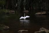 雙溪秋天的鳥類:074A5624.JPG