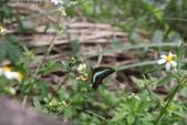 秋天雙溪的昆蟲:074A4762.JPG