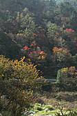 福壽山農場、武陵農場~~露營、賞楓行:1114 555.jpg