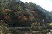 福壽山農場、武陵農場~~露營、賞楓行:1114 557.jpg