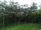 漯底山自然公園:P_20170718_173716_vHDR_Auto.jpg