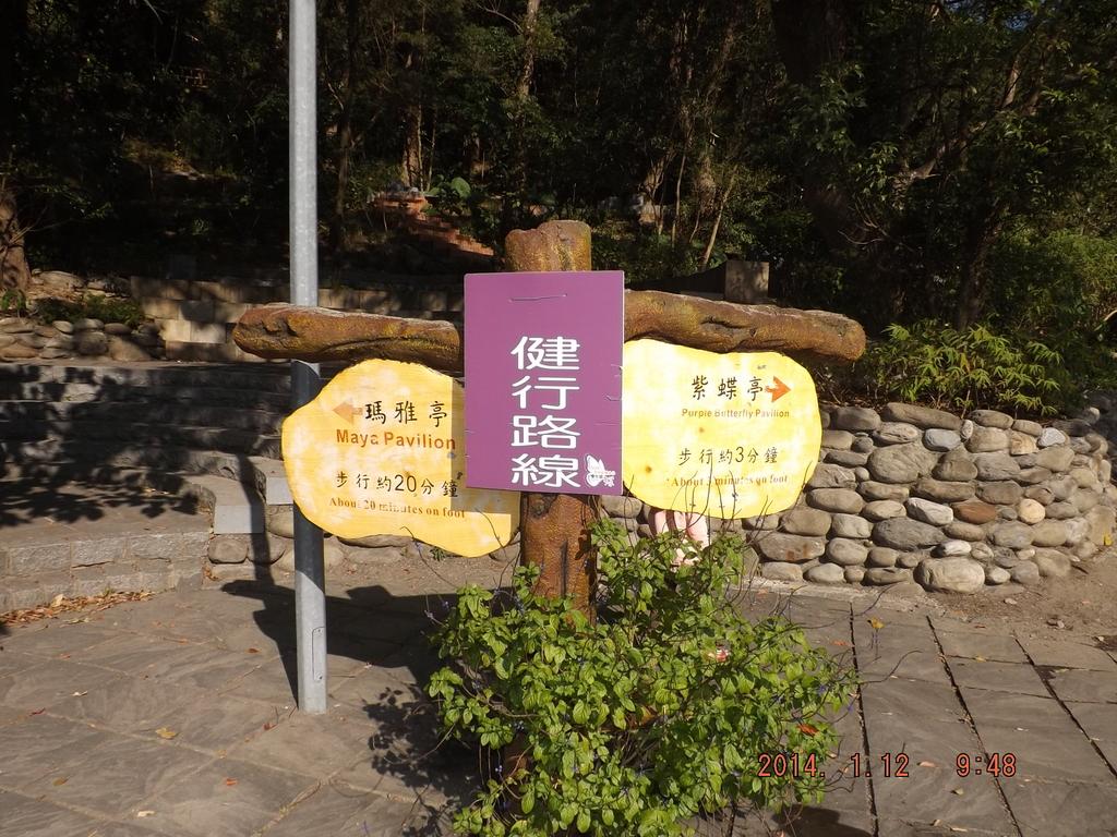 茂林紫斑蝶:DSCF5373.JPG