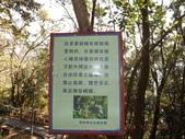 茂林紫斑蝶:DSCF5383.JPG