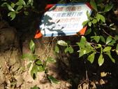 茂林紫斑蝶:DSCF5387.JPG