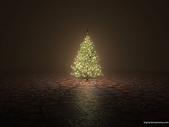 未分類相簿:the tree.jpg