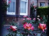 英國-蘇格蘭愛丁堡:2009-06-13_11-58-12_IMG_0361_Rose(四04;58).jpg