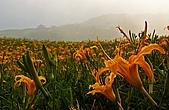 花蓮六十石山、赤科山--賞金針忘憂鬱:2008-08-16_17-31-04.jpg