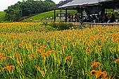 花蓮六十石山、赤科山--賞金針忘憂鬱:2008-08-17_11-27-47_涼棚.jpg