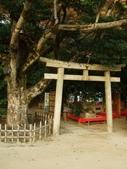 11/14~18從高雄岡山到日本岡山散步~Day1岡山後樂園(傻瓜數位版):DSCF9977.JPG