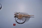 紐西蘭遊記3-前進Wellington:帶刺的貝殼