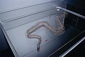 紐西蘭遊記3-前進Wellington:一條沒有肉的的蛇