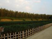 11/14~18從高雄岡山到日本岡山散步~Day1岡山後樂園(傻瓜數位版):DSCF9978.JPG