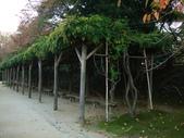 11/14~18從高雄岡山到日本岡山散步~Day1岡山後樂園(傻瓜數位版):DSCF9984.JPG