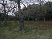 11/14~18從高雄岡山到日本岡山散步~Day1岡山後樂園(傻瓜數位版):DSCF9998.JPG