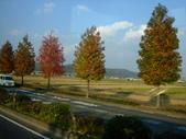 11/14~18從高雄岡山到日本岡山散步~Day1岡山後樂園(傻瓜數位版):DSCF9961.JPG
