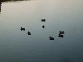 11/14~18從高雄岡山到日本岡山散步~Day1岡山後樂園(傻瓜數位版):DSCF9983.JPG