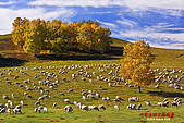 2008年內蒙古壩上攝影:080923楊樹背-350D-6485.jpg