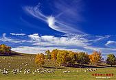 2008年內蒙古壩上攝影:080923楊樹背-E510-9230437.jpg