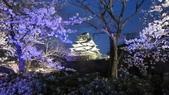 2012 阪京夜櫻之旅:IMG_6269.jpg