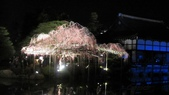 2012 阪京夜櫻之旅:IMG_5613.jpg
