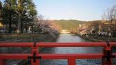 2012 阪京夜櫻之旅:IMG_5516.jpg