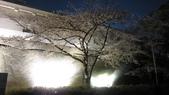 2012 阪京夜櫻之旅:IMG_5260.jpg