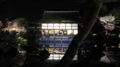 2012 阪京夜櫻之旅:IMG_5590.jpg