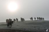 金秋北疆遊《一》:DSC_3089(p)天鵝湖.jpg