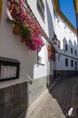 西班牙的哥多華:DSC_1826哥多華舊城區巷道_副本.jpg