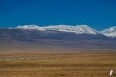 金秋北疆遊《一》:DSC_3137.jpg