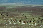 金秋北疆遊《五》:DSC_3817哈巴河往賈登峪路上風光.jpg