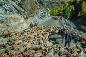 金秋北疆遊《五》:DSC_3806往賈登峪路上遇見的牧民.jpg