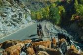 金秋北疆遊《五》:DSC_3809.jpg
