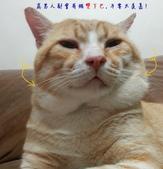 文章中的相簿:咪咪貓.jpg