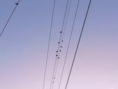記 憶:鳥的音符