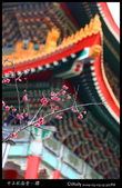 中正紀念堂之櫻:IMG_4352.jpg