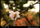 中正紀念堂櫻與影:IMG_4735.jpg