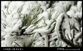 我在黃山三:G7X_IMG_9533.jpg