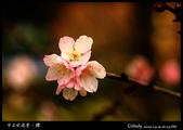 中正紀念堂櫻與影:IMG_4728.jpg