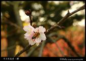 中正紀念堂櫻與影:IMG_4737.jpg