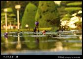 中正紀念堂櫻與影:IMG_4795.jpg